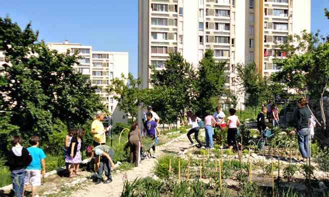 Jardin partagé 2